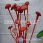 淄博吊�粞b��S家生�a��b吹制��g玻璃琉璃��g品蘑菇配�工�品